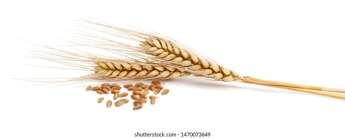 spikelets with wheat on a white background - Shutterstock ID 1470073649