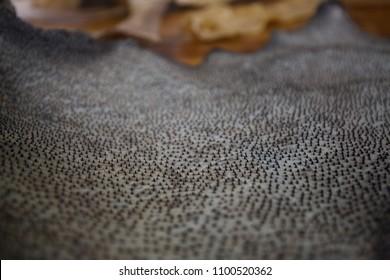 Spikes on shark skin