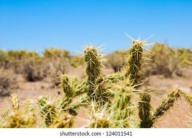 Spikey Desert Cactus