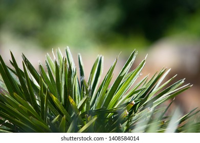 Spikey green plant with blurred green and orange background