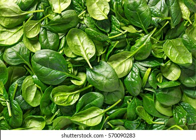 Spinach background full image. Top view
