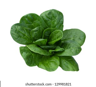 Spinach Isolated on a white background