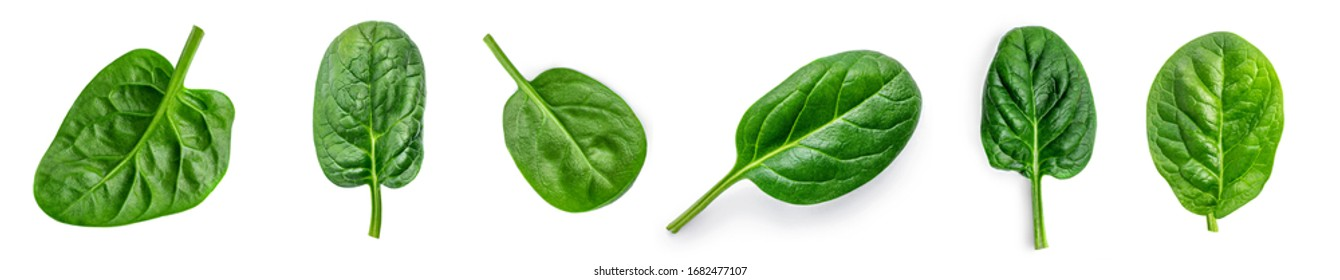 Spinach leaf isolated on white background. Fresh green baby spinach Top view. Flat lay.