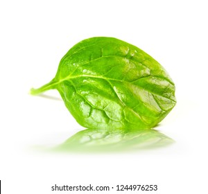 Spinach leaf on white background
