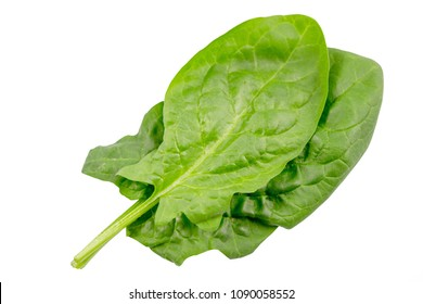 Spinach leaves close up isolated on white background with clipping path.