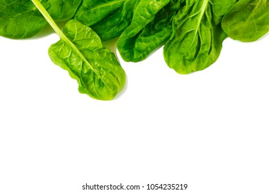 Spinach leaves isolated on white background, copy space