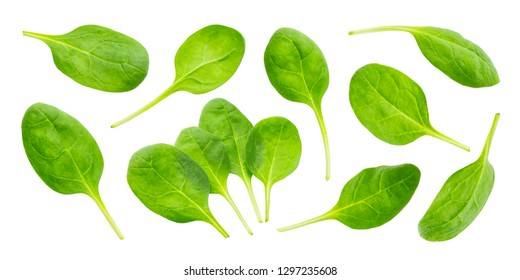 Spinach leaves isolated on white background with clipping path, close-up, collection