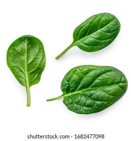 Spinach leaves  isolated on white background. Various Spinach Macro.  Top view. Flat lay.