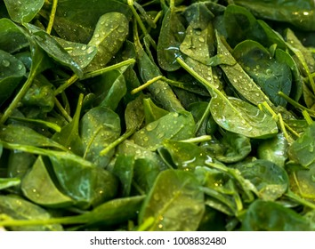 Spinach. Spinach leaves on a market outside. Organic spinach. Spinach background