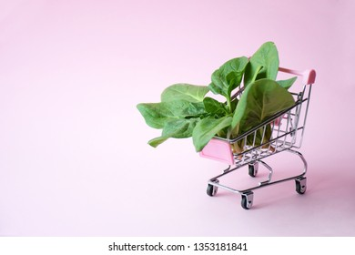 Spinach on pink background with left copy space. Supermakret trolley and green salad. Healthy food and vegetarian concept. Sale, discount concept. Creative design.