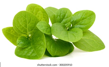 spinach vegetables isolated on white background