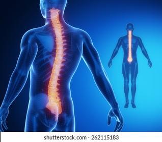 SPINE bone anatomy x-ray scan