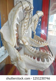 A spine-chilling selection of massive jaw bones of some ruthless man-eater great white sharks are on display in a shop at the Caudan Waterfront in Port Louis on the beautiful island of Mauritius.