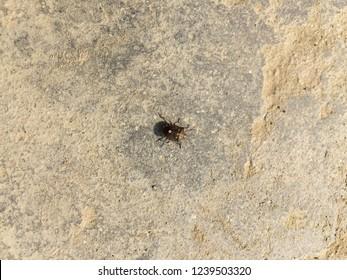 Spined soldier bug.Kathmandu Nov 25/2018.