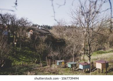 Sping rural landscape