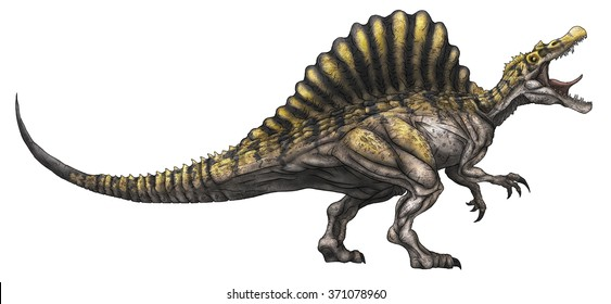 Spinosaurus colored line drawing.