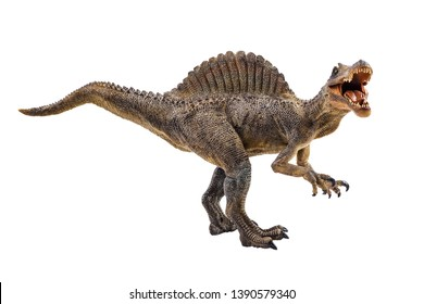 Spinosaurus  ,dinosaur on white background  .