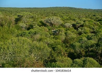 Spiny forest in Berenty Madagascar
