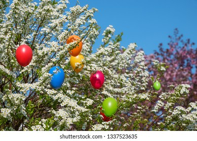 spiraea bush in the garden with white blossoms and colorful easter eggs,