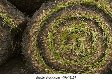 spiral of fresh rolled grass turf for the garden