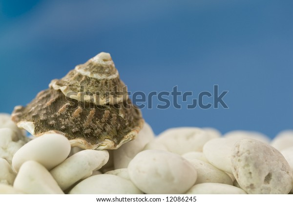 Spiral seashell on white stones with blue sky background