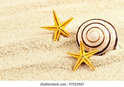 Spiral seashell and two seastars on a sand.