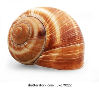 Spiral shell isolated on white