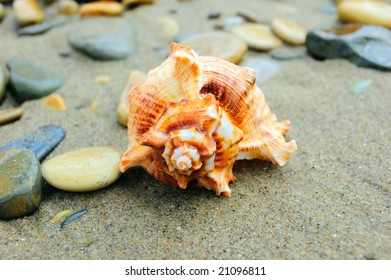 spiral-shellfish-on-sand-pebbles-260nw-2