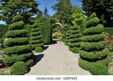 spiral trees in rose garden