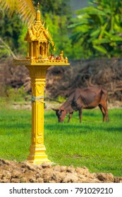 SPIRIT HOUSE GUARDING THE LAND. A skinny cow munches grass near a miniature house. The house is built for the guardian spirit to protect the land.