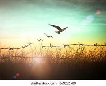 Spiritual freedom concept: Silhouette of bird flying and barbed wire at autumn sunset background