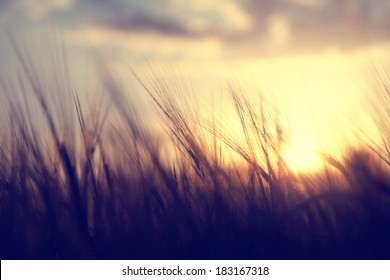 Spiritual golden wheat field with sunset. Vintage filter effect used.