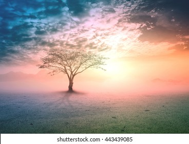 Spiritual healing life concept: Silhouette alone tree on beauty meadow landscape wallpaper background