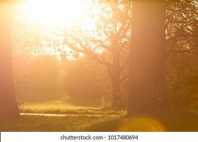 spirti of backlight at sunset in a ochard