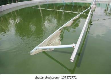 Spirulina harvesting