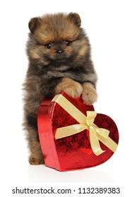 Spitz dog puppy with red heart on white background. Baby animal theme Valentine day