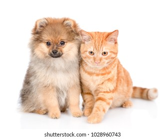 spitz puppy and cat sitting together. isolated on white background