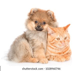 spitz puppy embraces a cat. looking at camera. isolated on white background