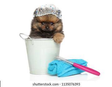 Spitz puppy sitting in a bath bucket and cap Bath theme Funny portrait on white background