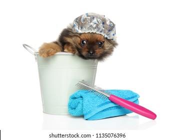 Spitz puppy sitting in a bath bucket and cap, Bath theme, Funny portrait on white background