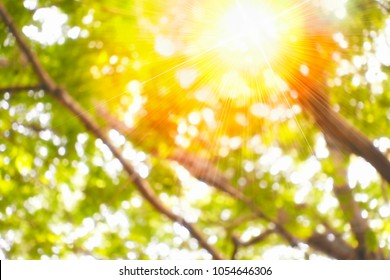 Splash light through forest leaves in golden heaven sun light concept: Abstract blur sun splash with bright nature and circular bokeh flare spark texture background