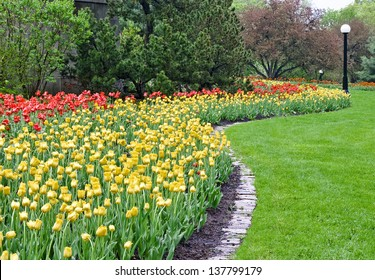 A splash of  red and yellow colored tulips cover a park area during the Spring Festival in Ottawa, Canada.