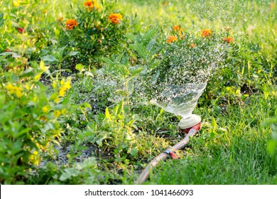 Splashes Of Water In The Garden With Flowers From An Old Irrigation Spray Nozzle