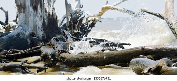 Splashing waves at the world famous Driftwood Beach, Jekyll Island