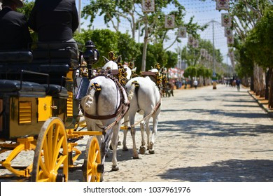 The splendid carriages and the Spanish horses
