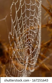 Splendid cobweb covered with tiny water drops of dew on unfocused natural background