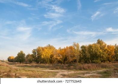 splendid fall trees and the blue sky