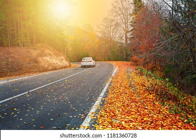 Splendid image in the forest colored leaves, asphalt road. İstanbul, Bursa, Turkey.
