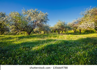 Splendid ornamental garden with blooming lush trees on a sunny day. Fresh seasonal background. Flowering orchard in spring time. Scenic image of trees in idyllic garden. Beauty of earth, Ukraine.