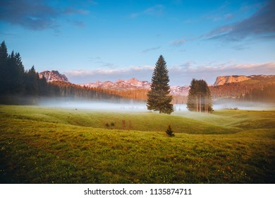 Splendid summer day in the Durmitor National park. Location place village Zabljak, Montenegro, Balkans, Europe. Scenic image of fresh alpine valley. Travel destination. Discover the beauty of earth.